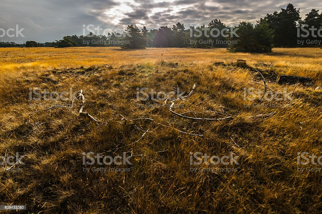 Grasland in De Hoge Veluwe stock photo