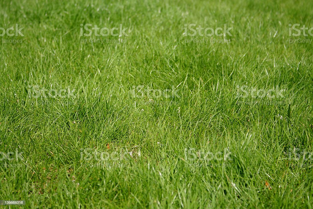 Grass 3 royalty-free stock photo