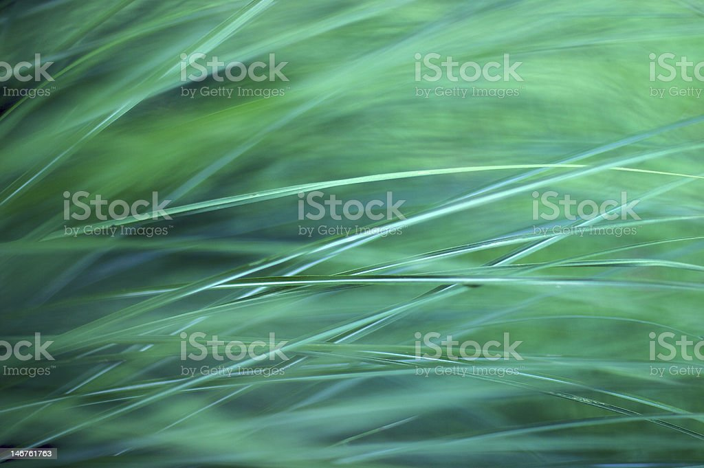 Grass Abstract royalty-free stock photo
