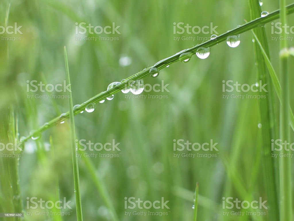 Grass after a spring rain royalty-free stock photo