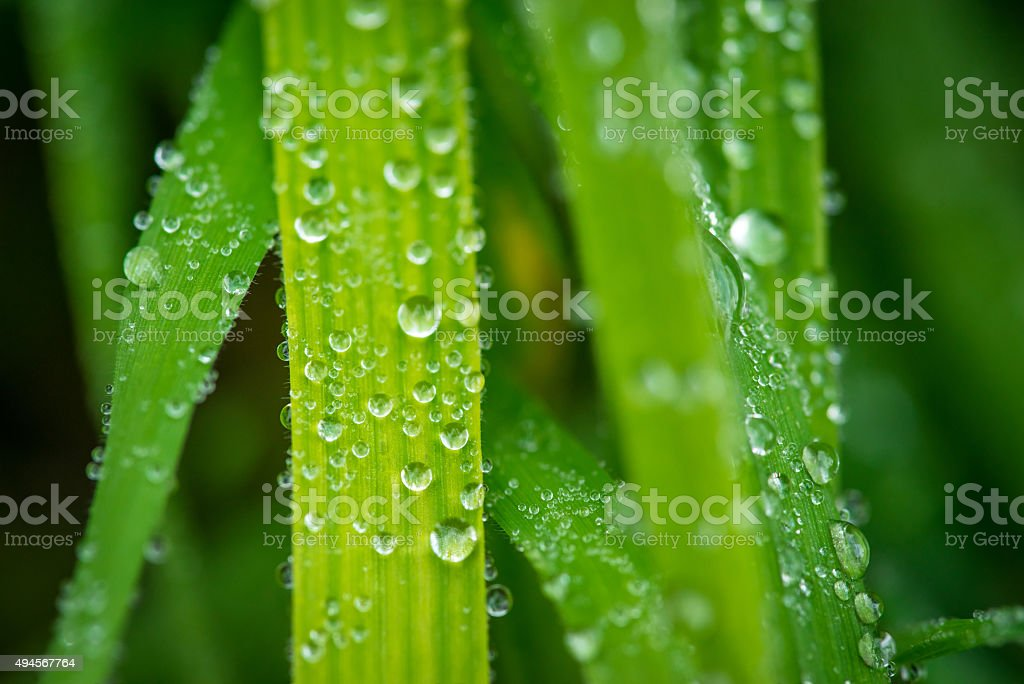 Grass after the rain stock photo