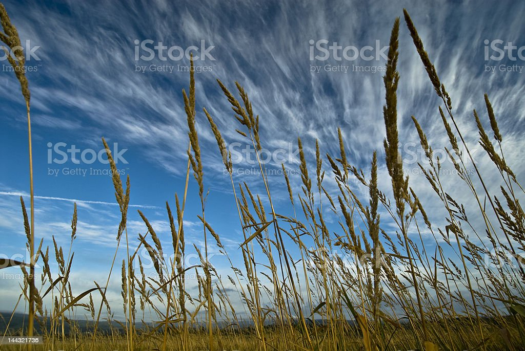 Grass Against the Blue Sky stock photo