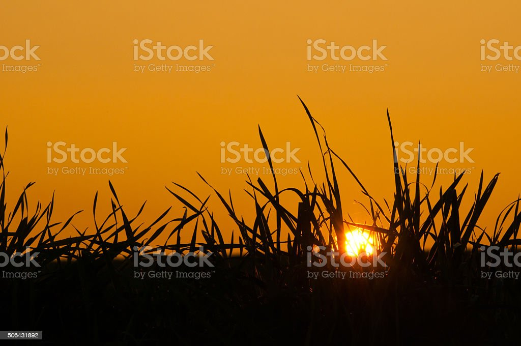 grass against the sky at sunset stock photo