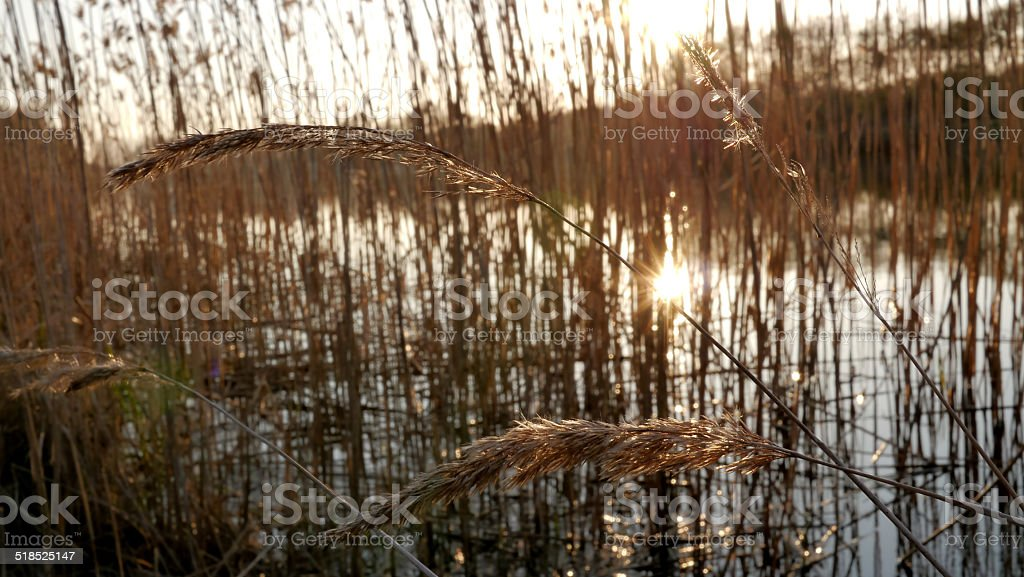 Grass and a reflection of the sun in the river royalty-free stock photo