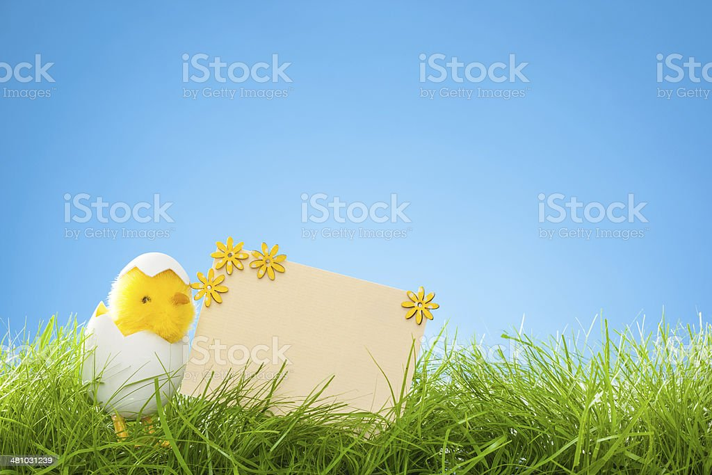 Grass and Blue Background - Easter Chicks royalty-free stock photo