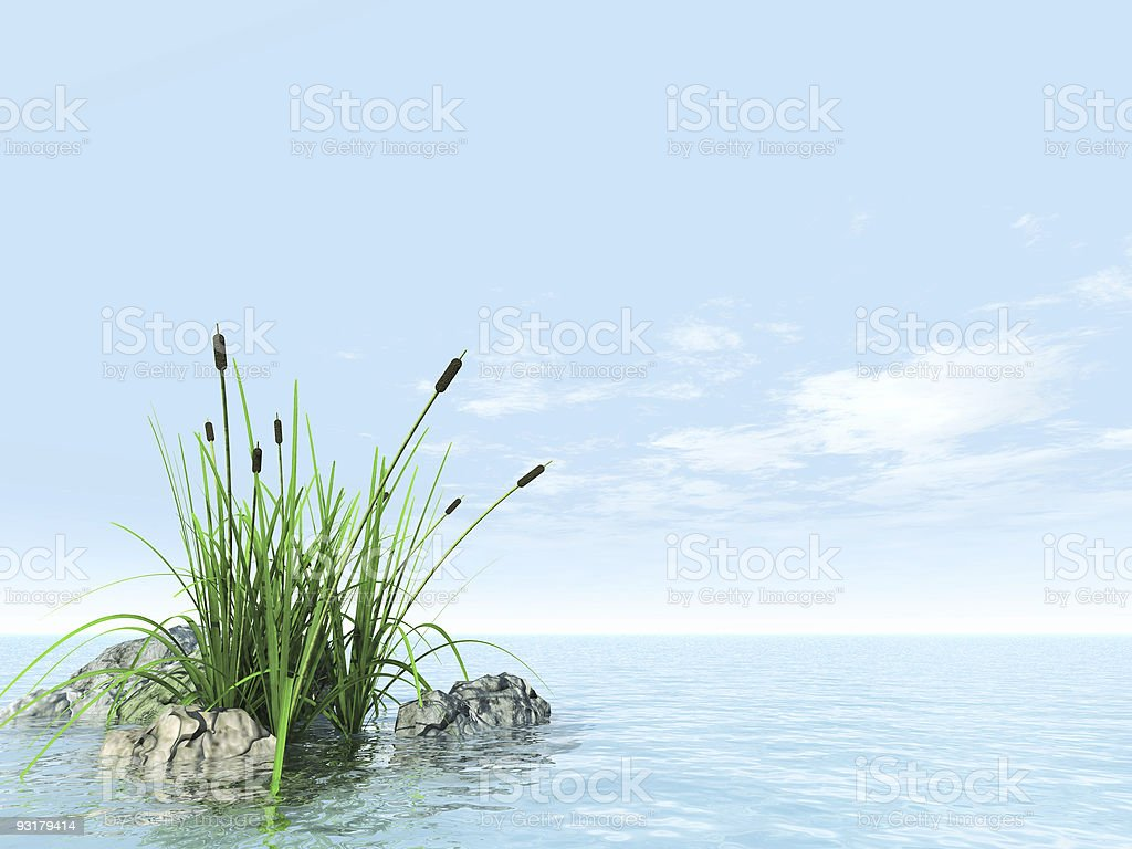 grass and canes royalty-free stock photo
