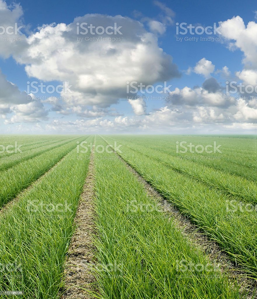 Grass and Clouds royalty-free stock photo