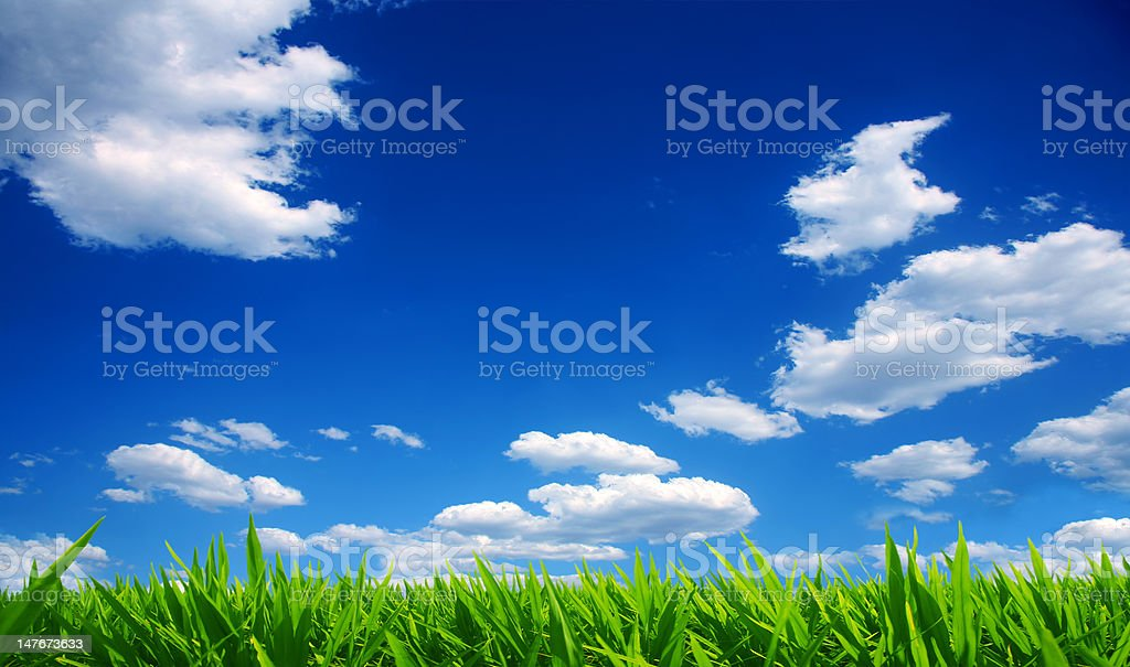 Grass and Cloudscape royalty-free stock photo
