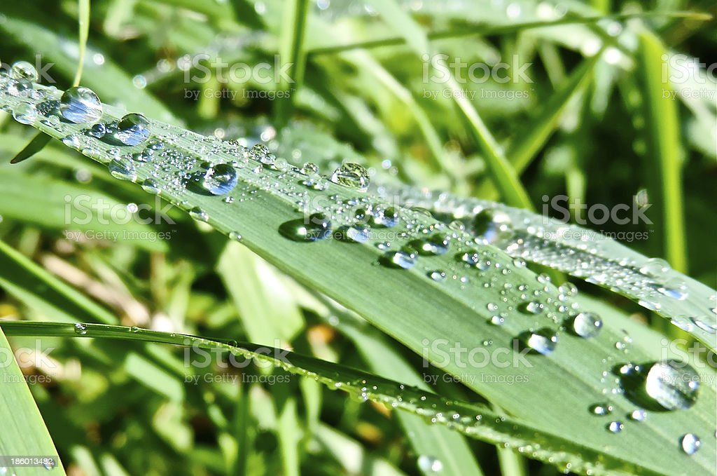 grass and dew drops stock photo