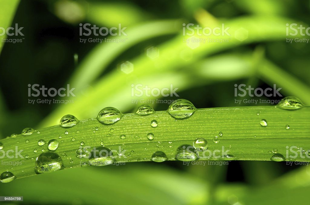 Grass and dew royalty-free stock photo