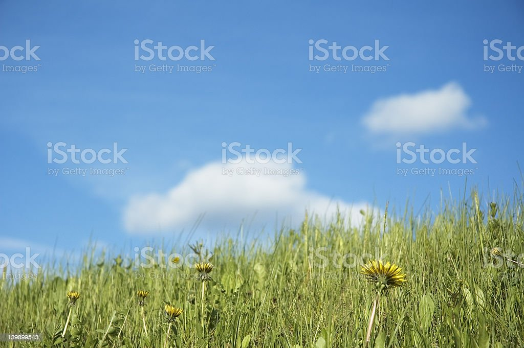 grass and flowers over blue sky - shallow focus royalty-free stock photo