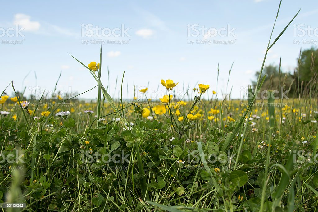 Grass and flowers royalty-free stock photo