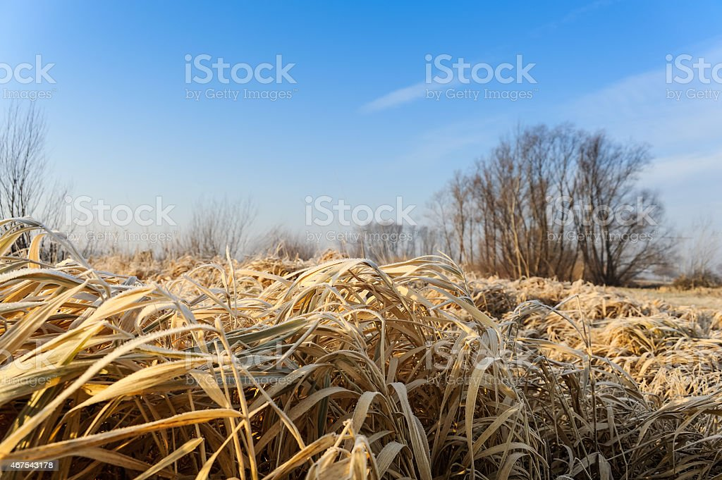 Grass and landscape in winter stock photo