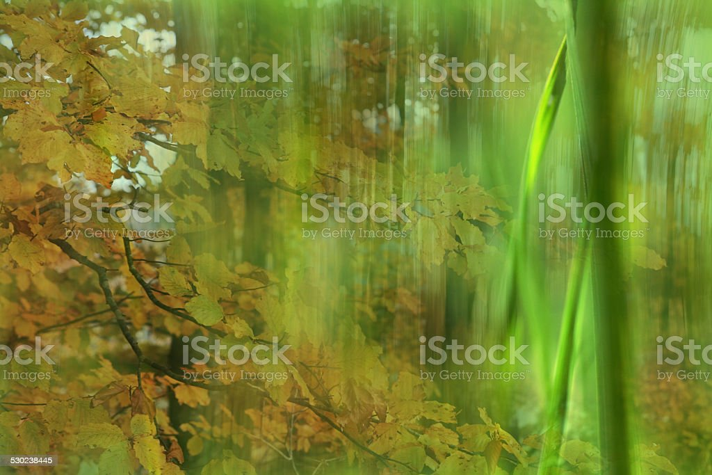 grass and leaf stock photo