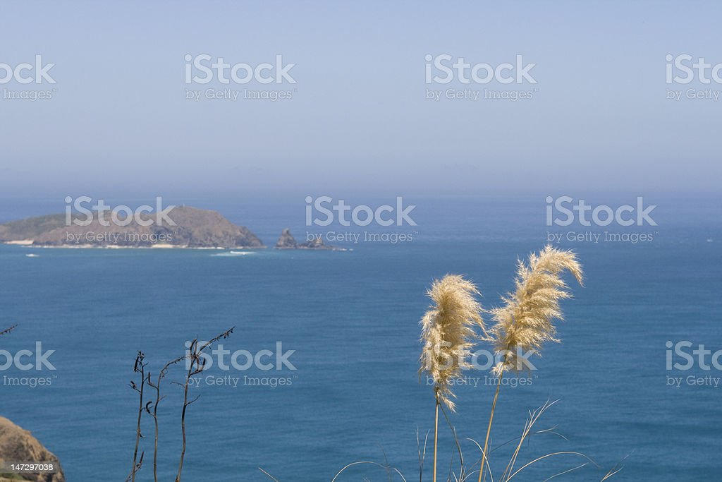 Grass and ocean royalty-free stock photo