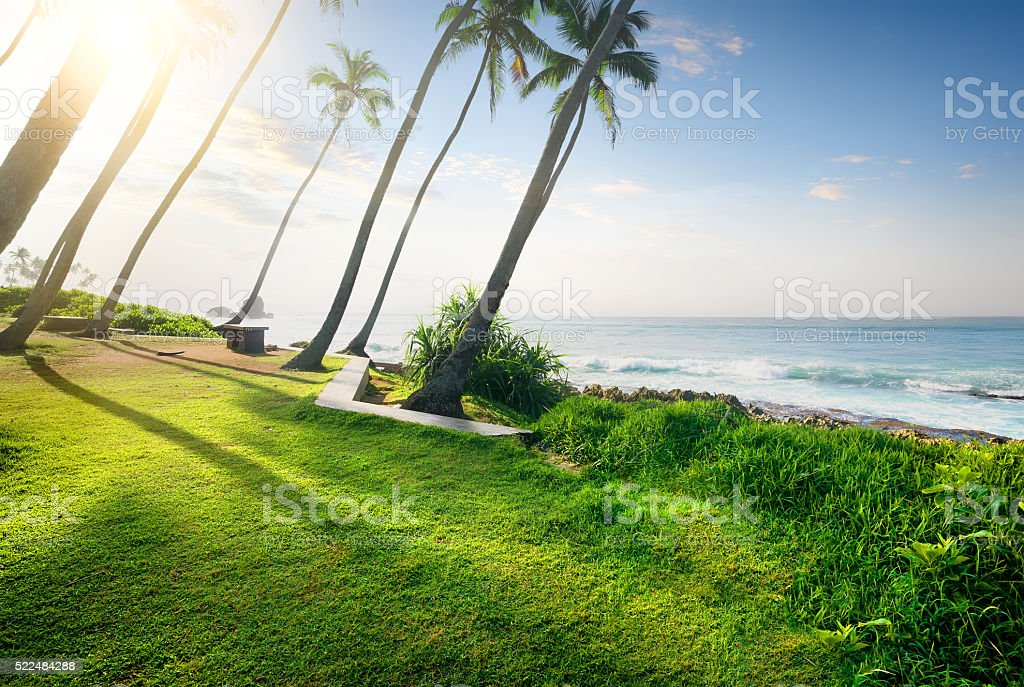 Grass and ocean stock photo