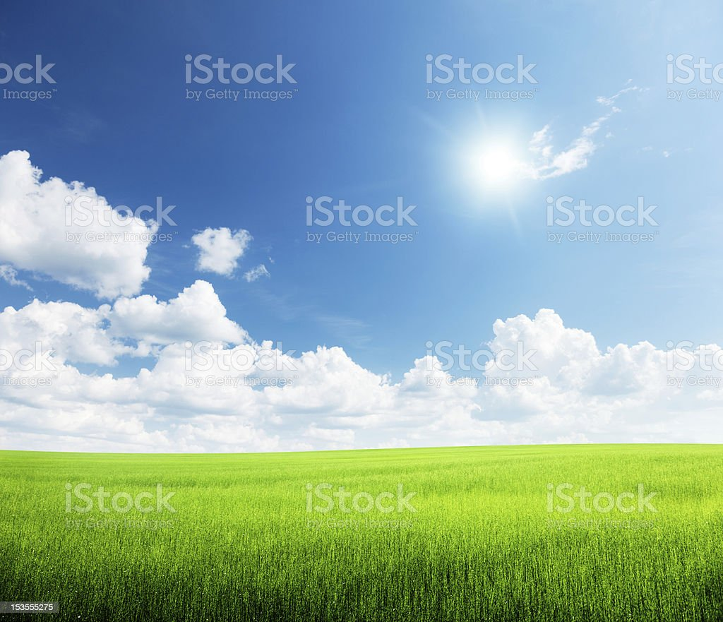 grass and perfect sky royalty-free stock photo