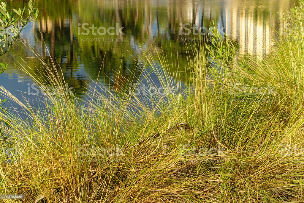 grass and reflection in water stock photo