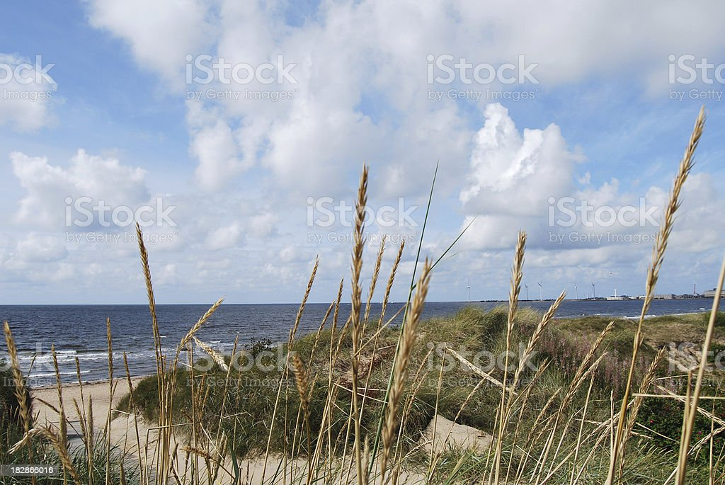 Grass and sand dunes with ocean in the background stock photo