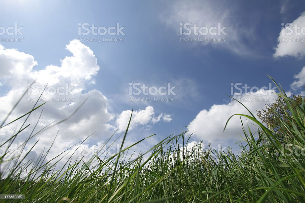 Grass and sky royalty-free stock photo