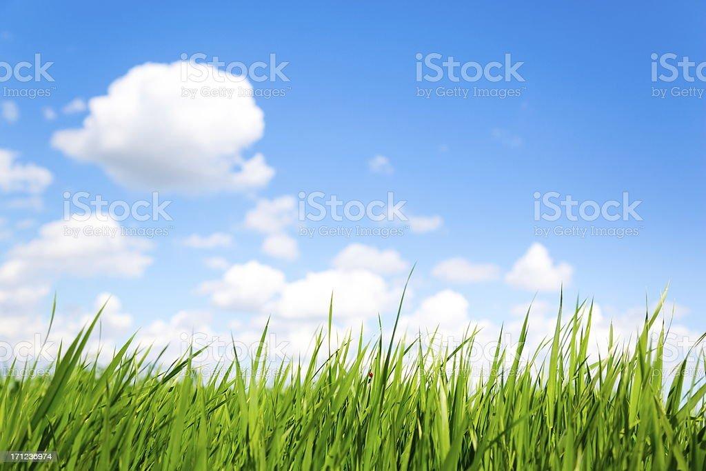 Grass and Sky-XXXL royalty-free stock photo