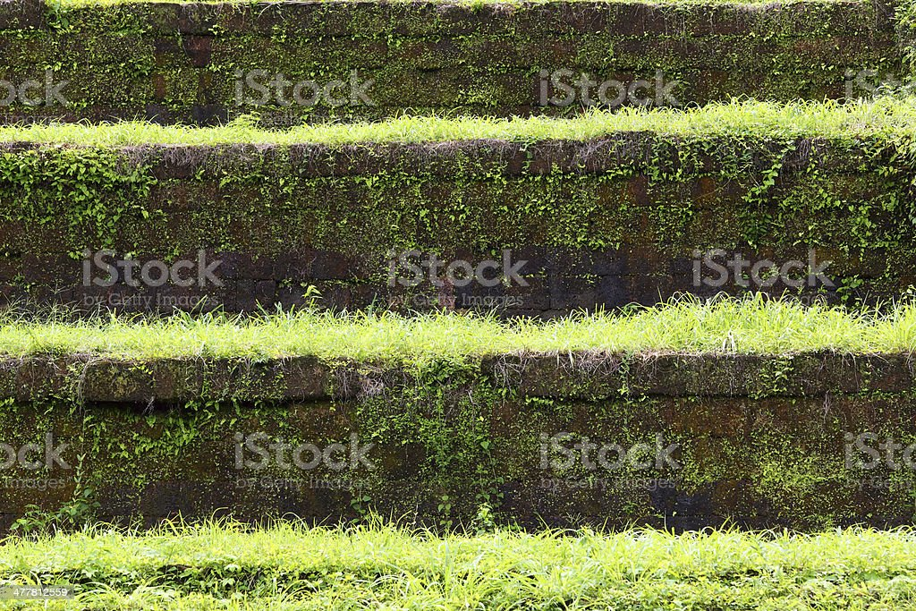Grass and stone stairs royalty-free stock photo