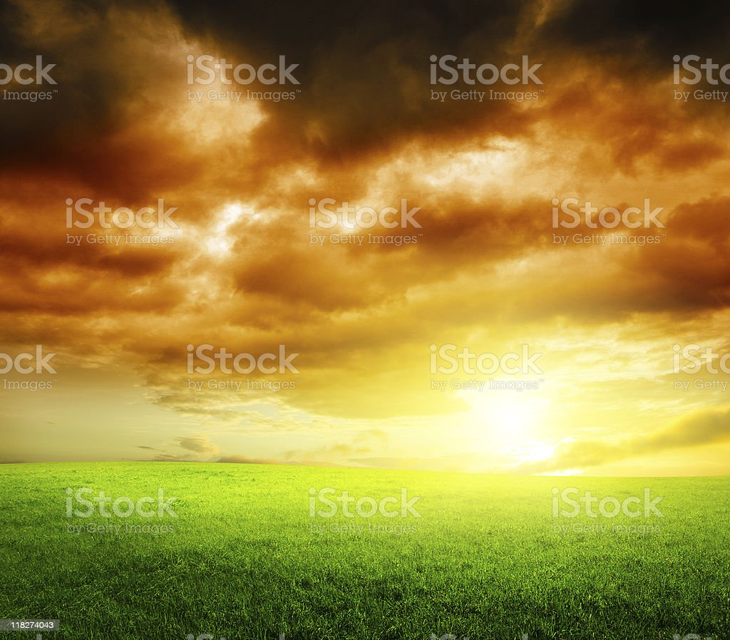 grass and sunset royalty-free stock photo