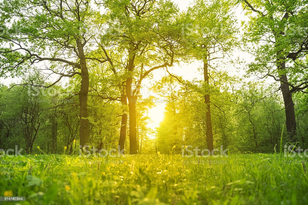 Grass and trees in the park illuminated backlit sunlight stock photo