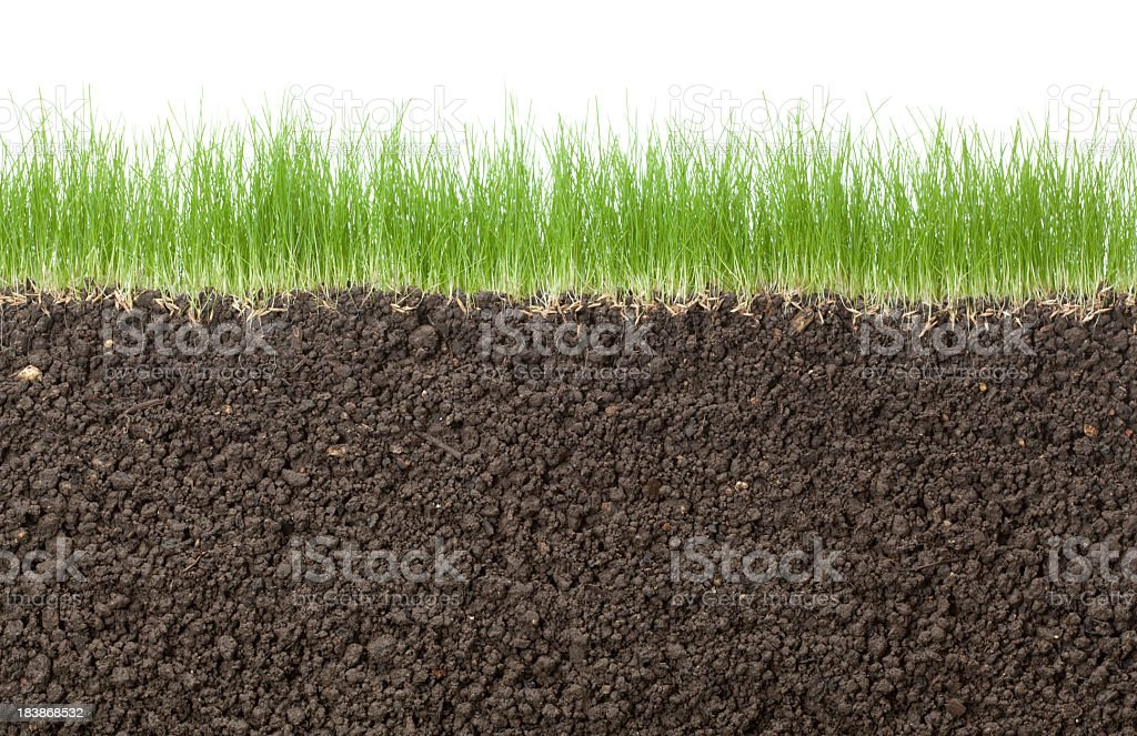 grass and white background stock photo
