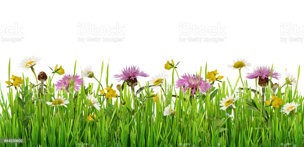 Grass and wild flowers border stock photo