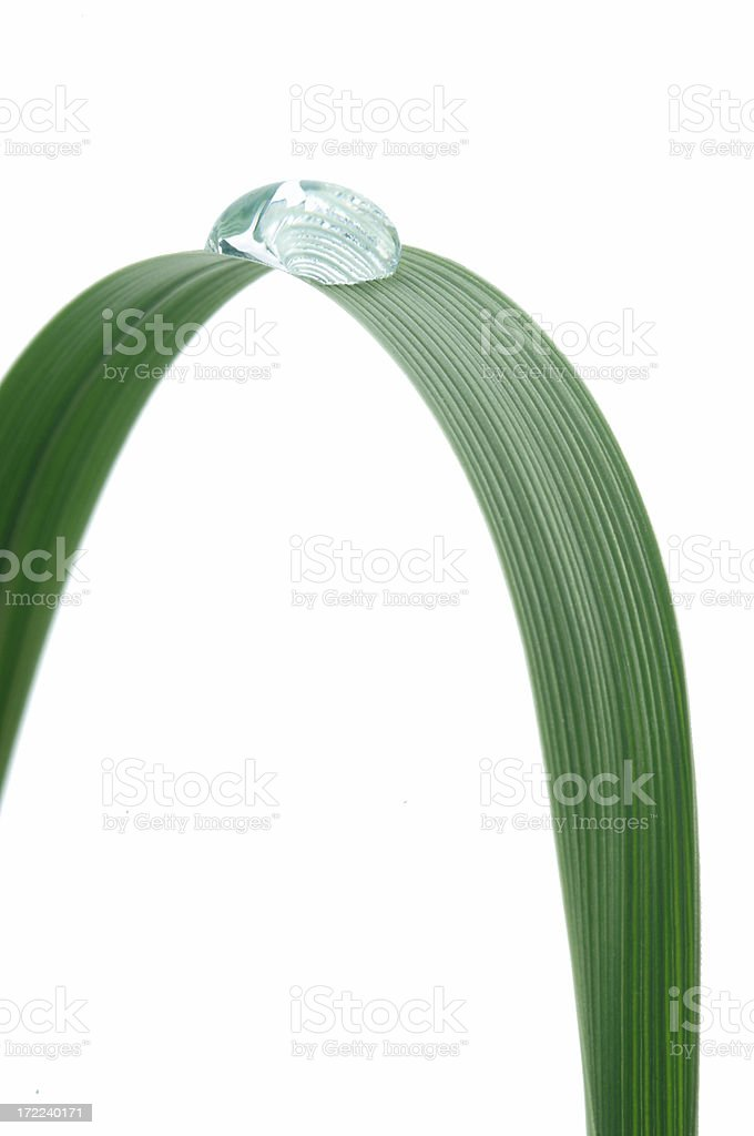 Grass Arch royalty-free stock photo
