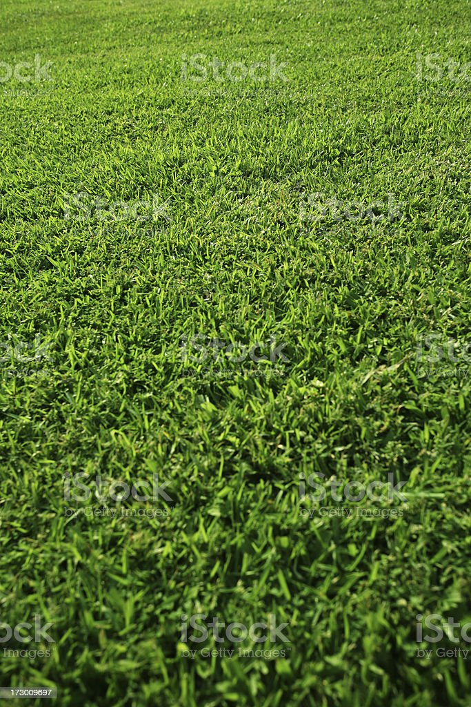 Grass Area stock photo