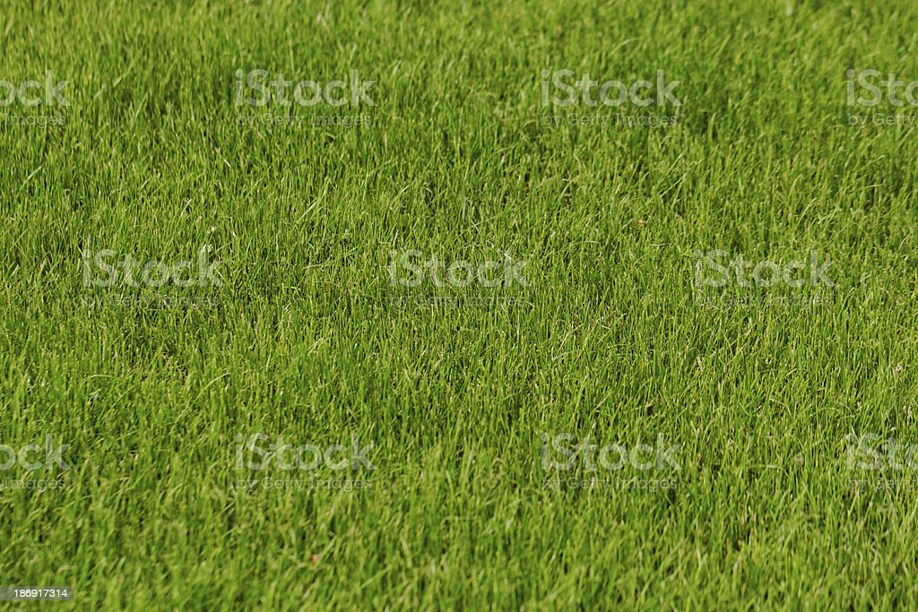 grass as background royalty-free stock photo