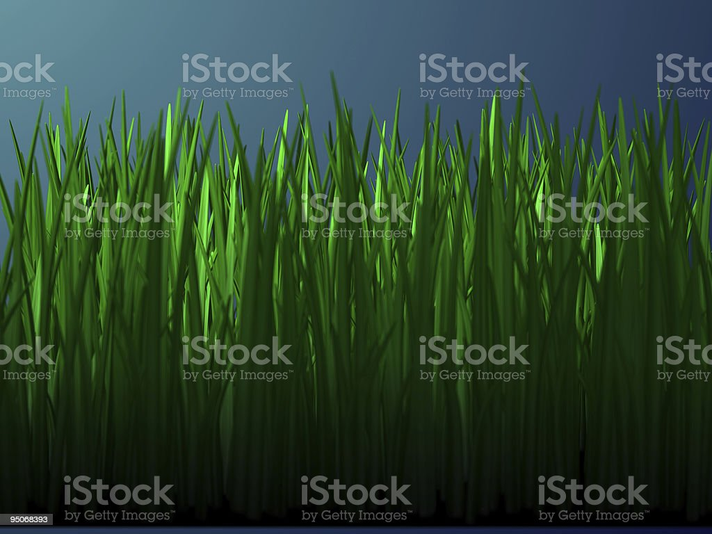 grass at night royalty-free stock photo
