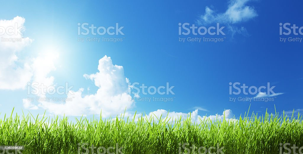 grass at sunny day stock photo