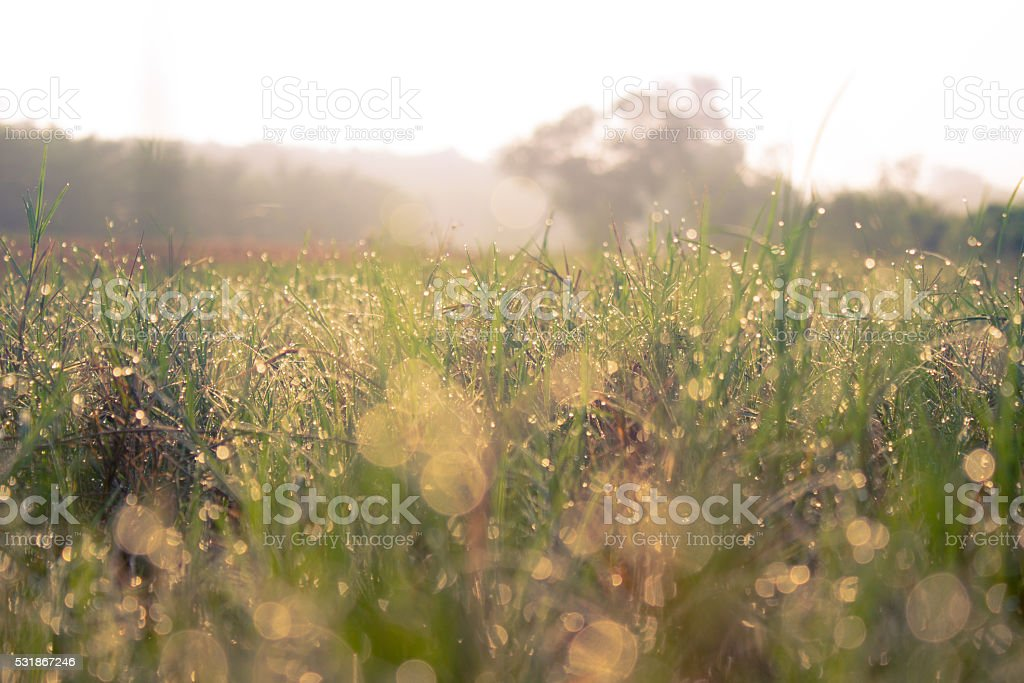 grass at sunrise stock photo