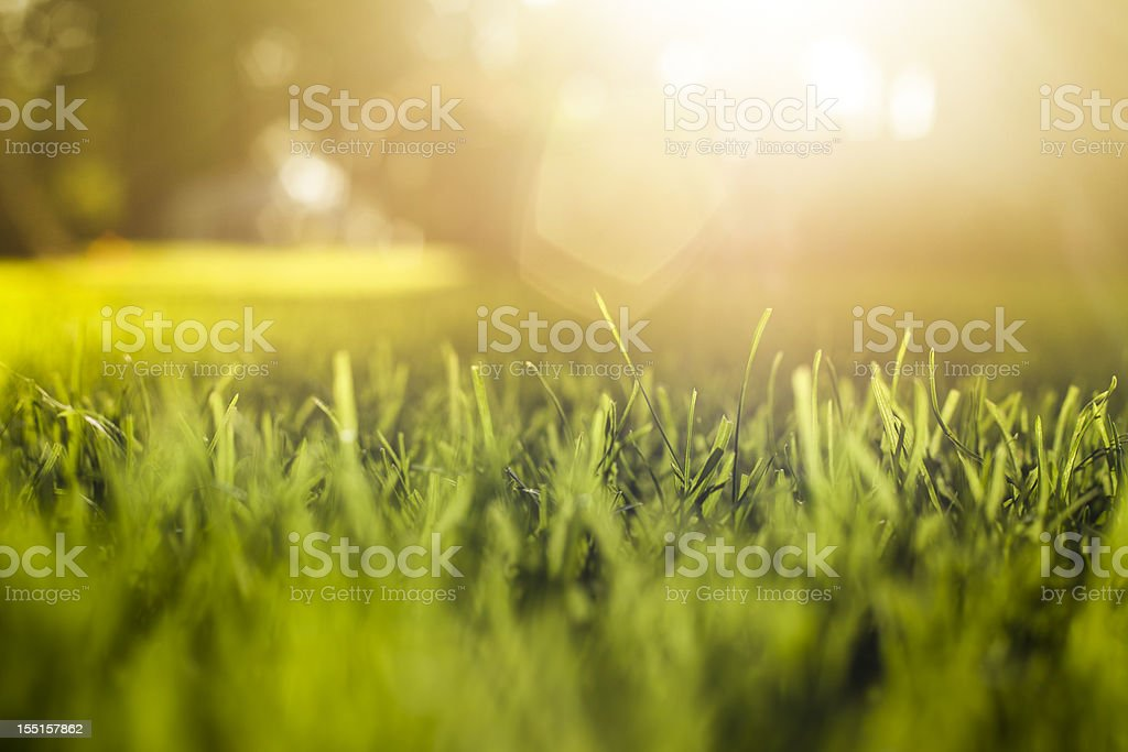 Grass Background at Sunset stock photo