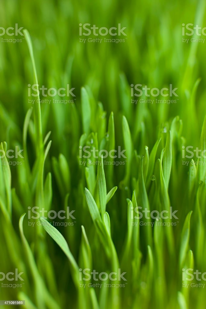 Grass background. royalty-free stock photo