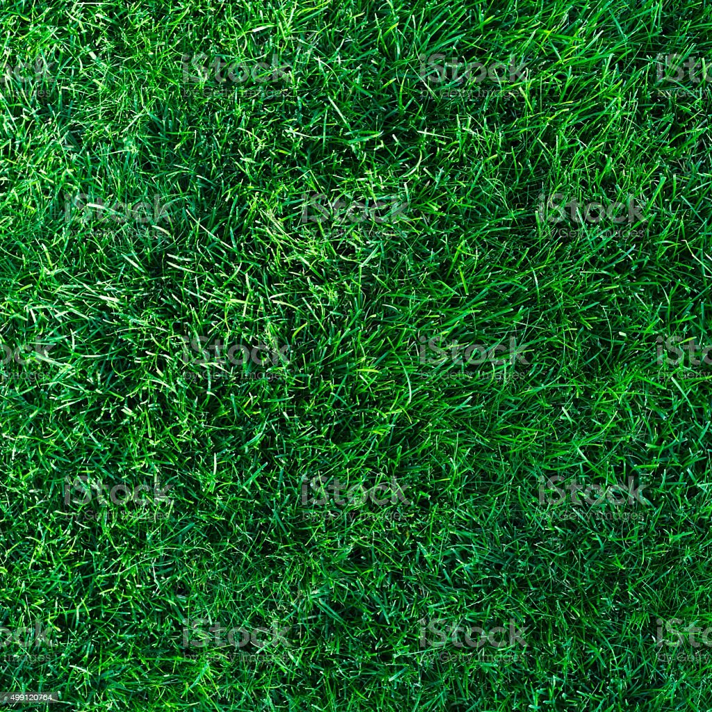 Grass background texture stock photo