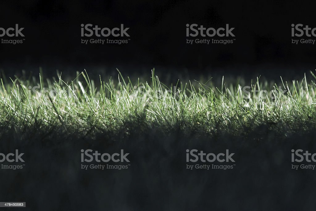 grass blades close horizontal stock photo