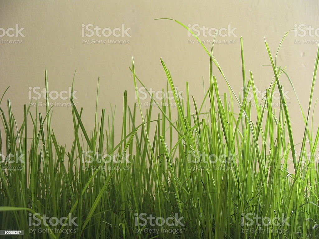 grass blades on wall background royalty-free stock photo