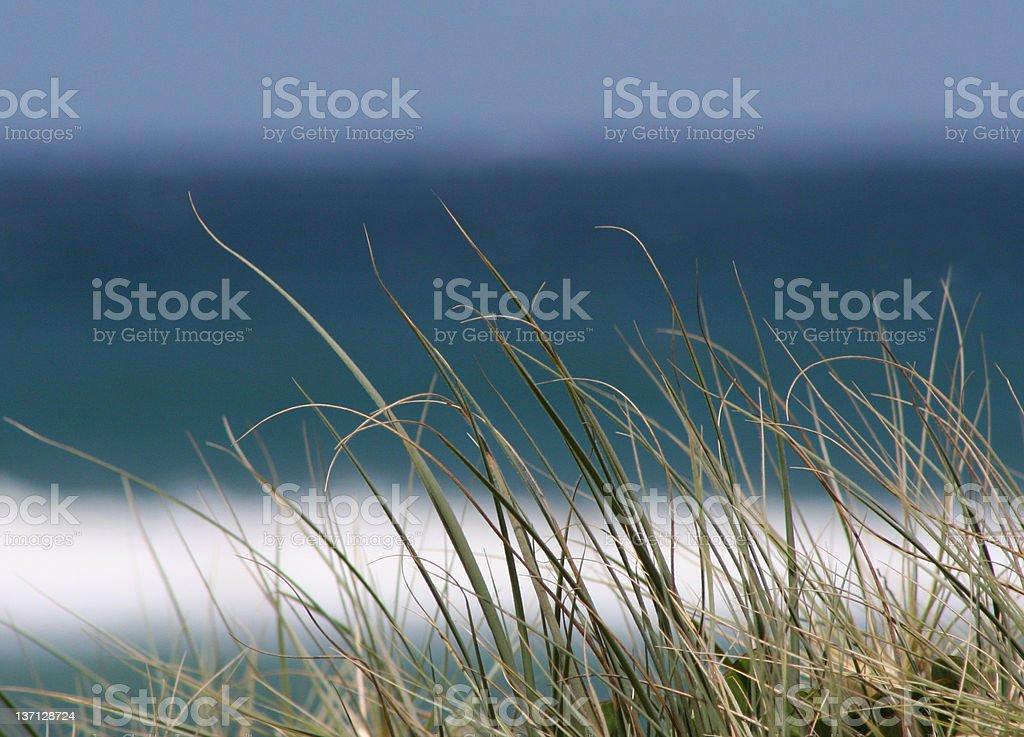 grass blue stock photo