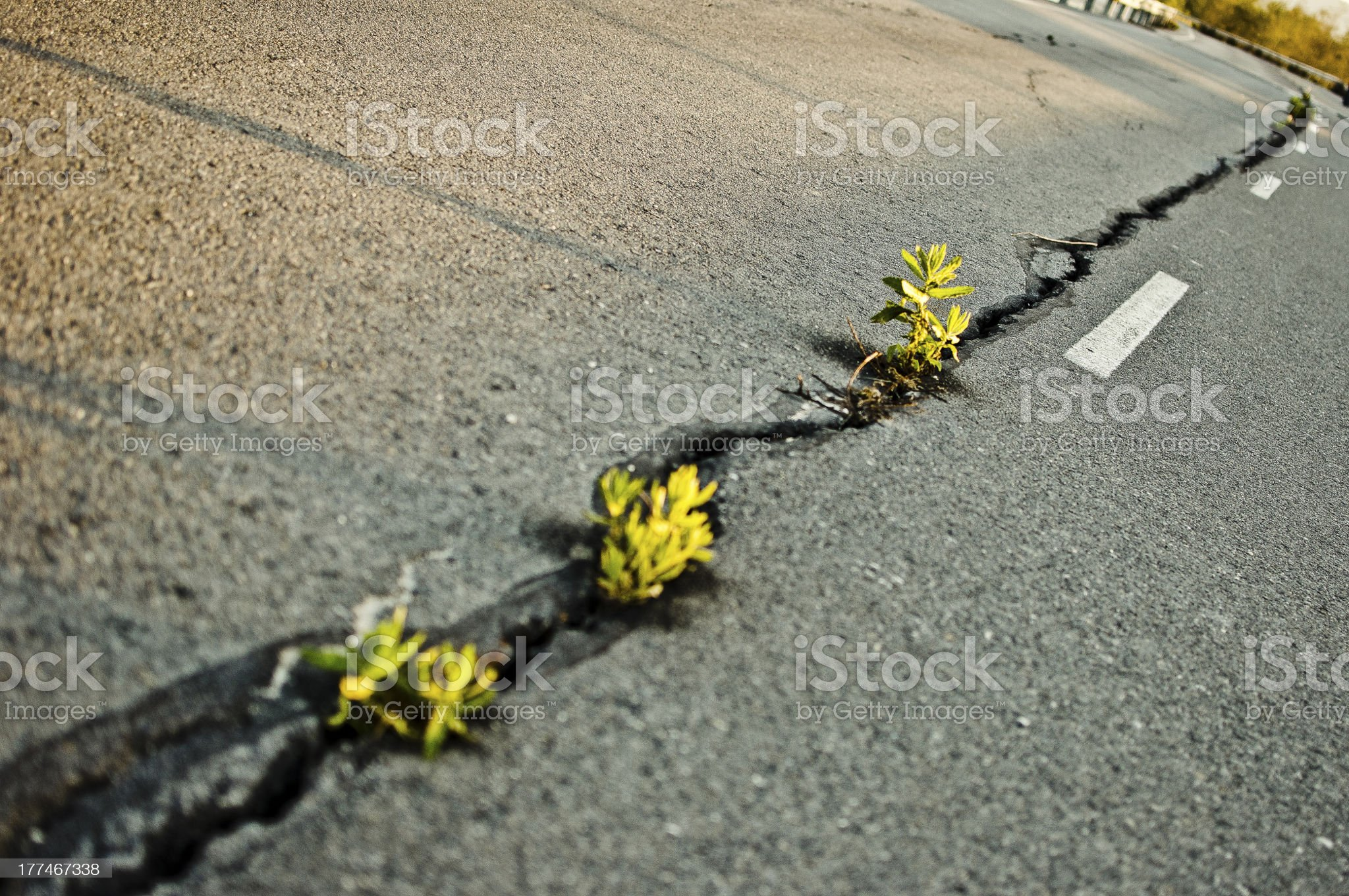 Grass breaking road royalty-free stock photo