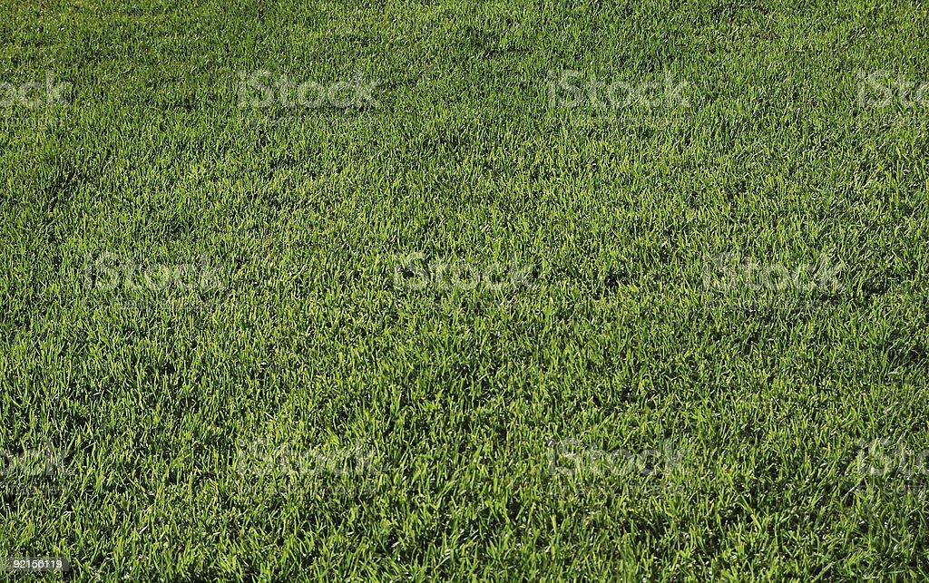 Grass carpet royalty-free stock photo