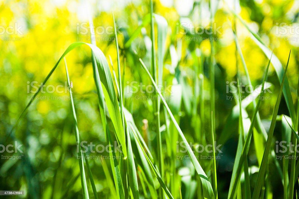 Grass close up stock photo