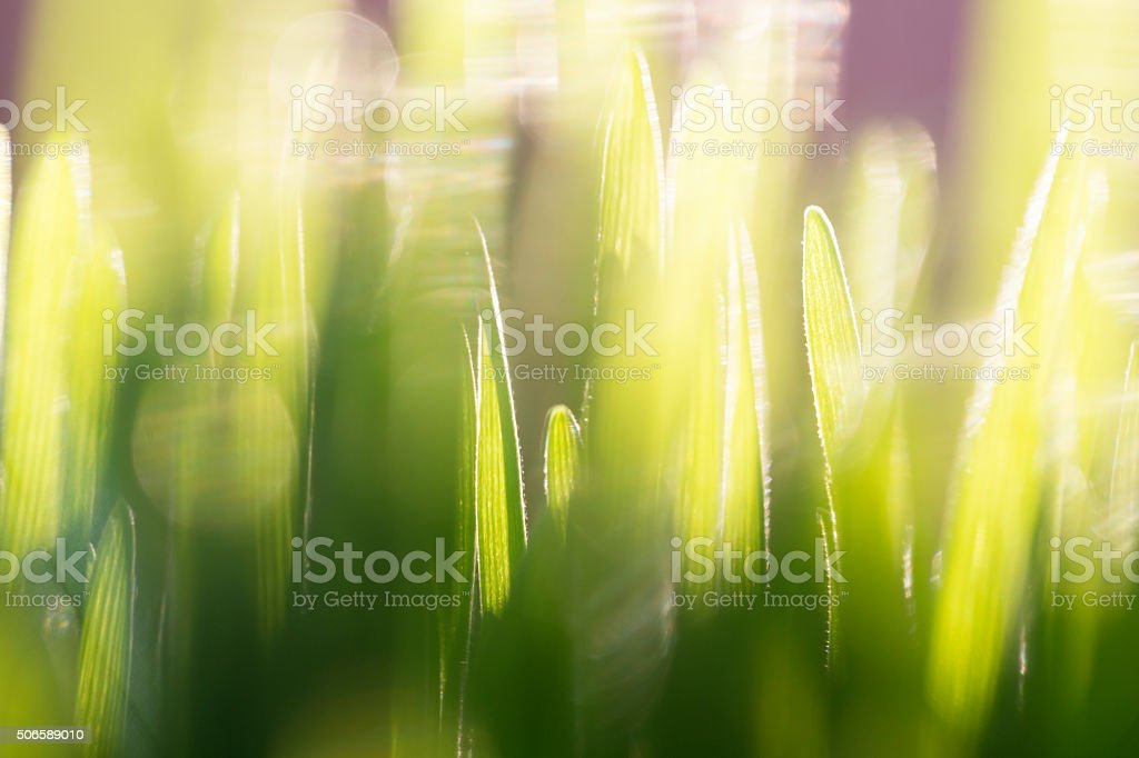 grass close up stock photo
