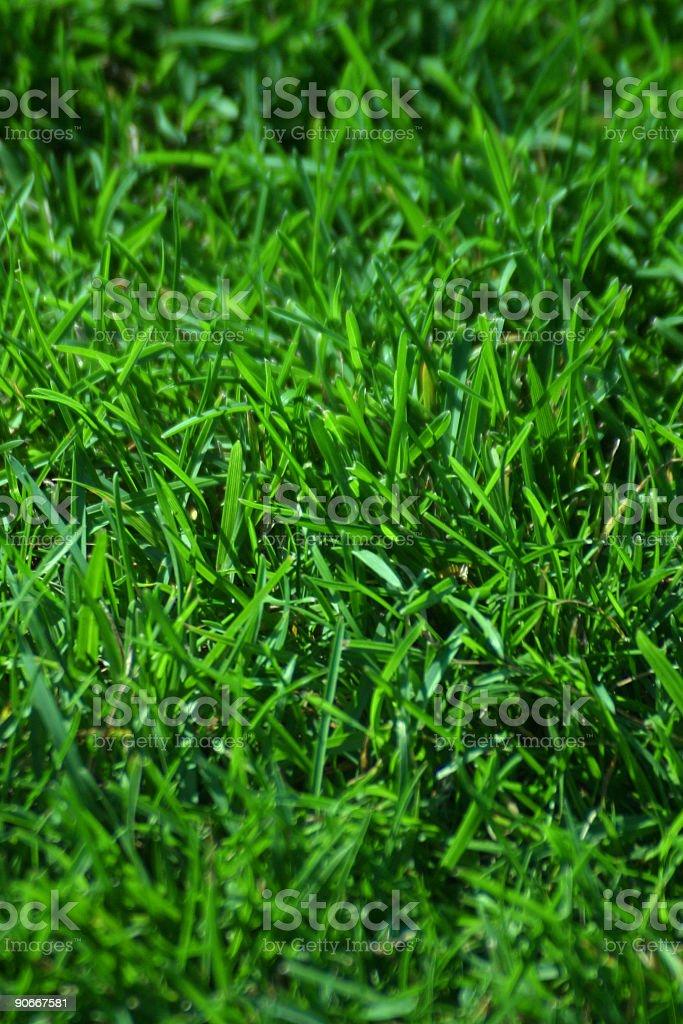 Grass Closeup 02 royalty-free stock photo