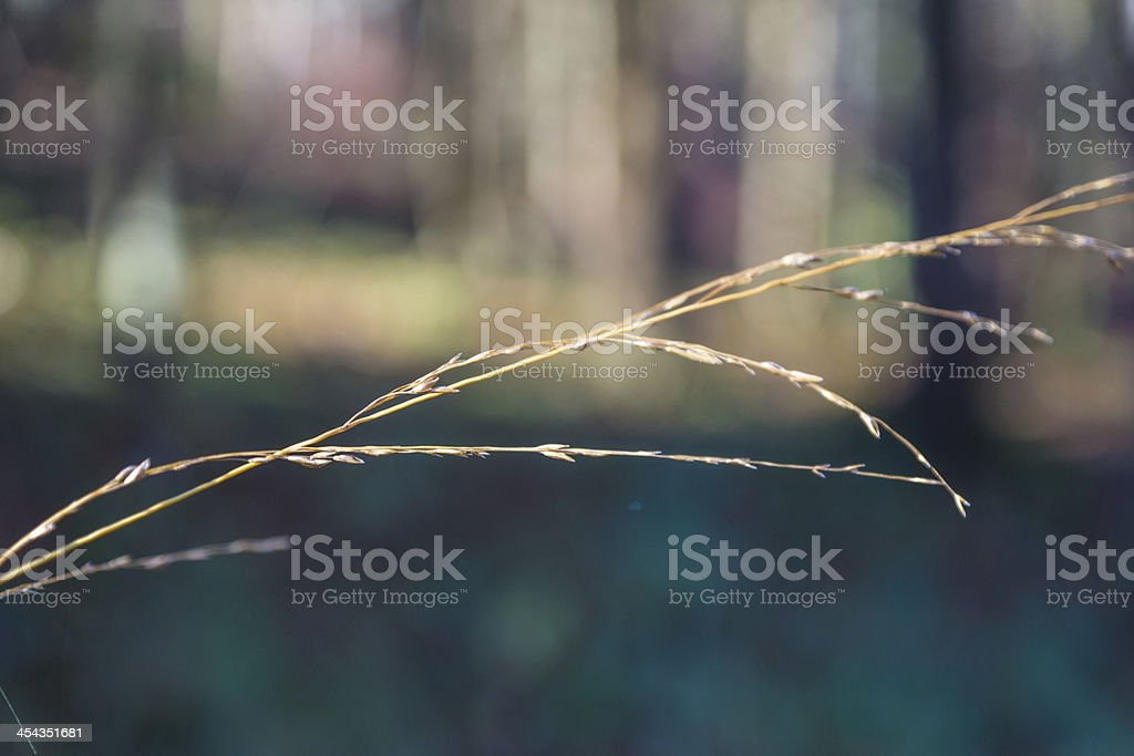 grass close-up against forrest stock photo