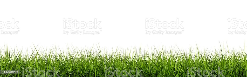 Grass closeup stock photo