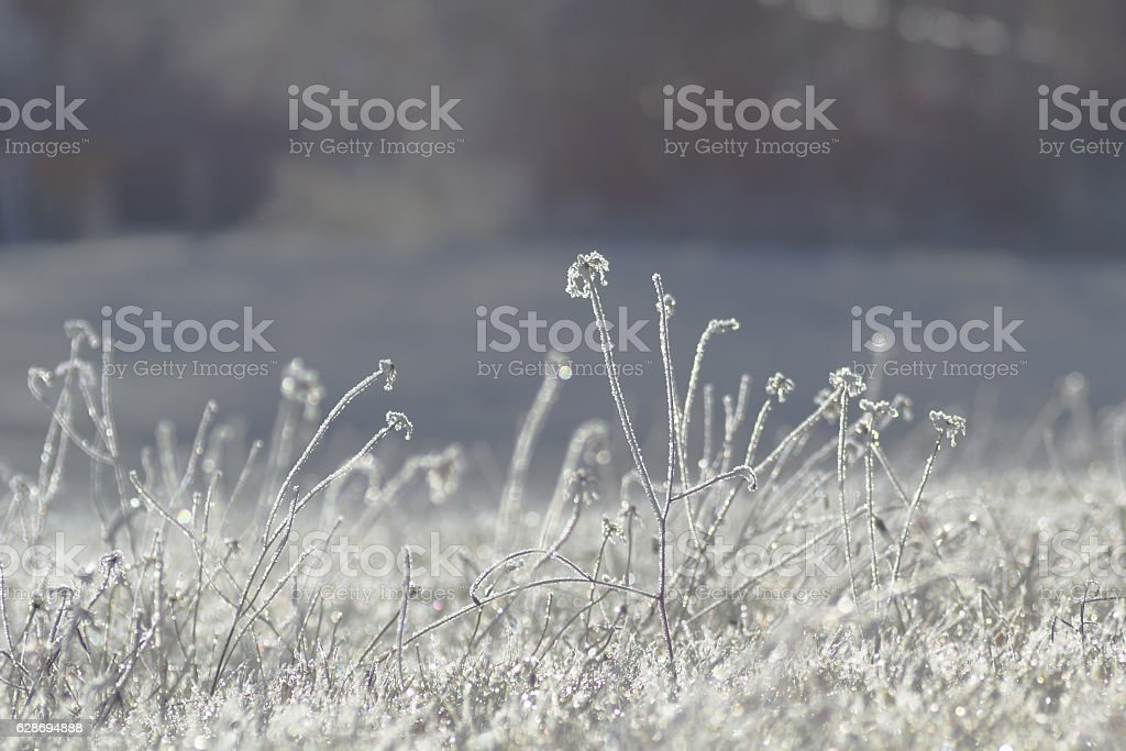 Grass covered with hoarfrost, abstract winter background stock photo